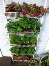 le jardin potager vertical une culture id ale le coin potager
