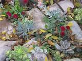 succulent rock garden garden ideas succulent rock garden landscape