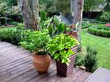 collection of containers on the deck with coleus potato vine and