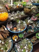 garden my garden crazy about air plants part 2 decor ideas