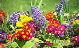 tips for early spring gardening examiner com