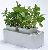 Self-Watering Indoor Gardens : hydroponics system