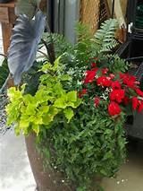 shade container garden garden containers sensational pots