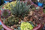succulent bowl diy for california armstrong garden centers
