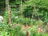 vegetable garden trellis ideas inexpensive Car Pictures