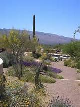 Landscaping area: Backyard landscaping ideas tucson az