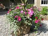 great container for full sun | Container Garden | Pinterest
