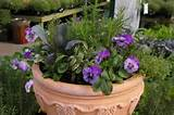 ... Edibles Container - California Winter Idea / Armstrong Garden Centers
