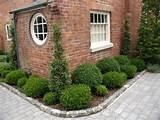 corner coverage boxwood garden pinterest