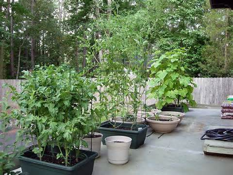 Vegetable Container Gardening Ideas