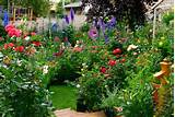 Garden Ideas Flowers | Native Garden Design