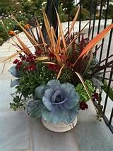 fall container planting courtyard ideas pinterest