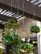diy backyard ideas turning metal wire into beautiful garden
