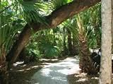 photos of mckee botanical garden vero beach attraction images