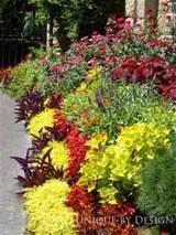 idea for high heat sunny area garden pinterest