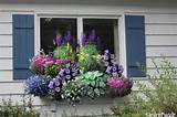 Window box garden - GardenPuzzle - online garden planning tool