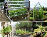 Amazing Interior Design Grow An Unusual Vegetable Garden