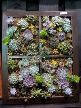 Great idea for old window frames, use it to plant succulents! Seen at ...