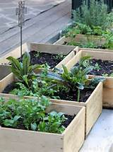 ... Easy Small Vegetable Garden Ideas To Try | Apartment Therapy