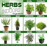 Best herbs for indoors | garden ideas | Pinterest