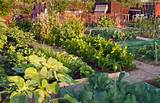 ample garden filled with lush and healthy vegetables a stone walkway