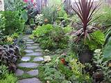 Succulents & tropicals | Garden Ideas | Pinterest