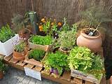 Container Herb Garden Design.jpg