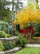 ... garden goes on and on. Here, a brilliant golden Japanese maple makes