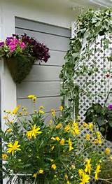 ... -and-yellow-daisy-designed-by-shirley-bovshow-for-small-narrow-garden