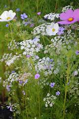 Planting Wildflowers: Top Tips & Wildflower Garden Ideas