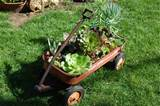 Old Wagon Planterhttp://www.faroutflora.com/2010/03/13/cool-and ...