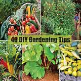 Gardening Tips For Better Harvest