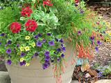 Container Garden | NEW PINS | Pinterest