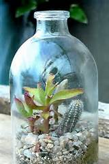 Container Gardening Picture Succulent Container Garden - design a room