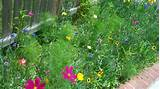 studio lime design flowers easy and cute wildflower garden