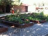 raised beds school garden ideas pinterest