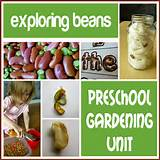 gardening ideas for preschool preschool gardening unit