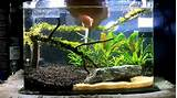 ... ideas 3 Gallon Planted Fishtankhow To Aquascape Youtube Simple