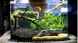 ideas 3 gallon planted fishtankhow to aquascape youtube simple