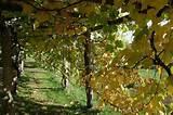 trellising grapes at home | Grape Trellis, Jubilee Farm, near ...