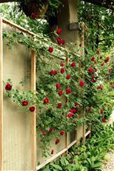 hope and honey how to make a custom rose trellis