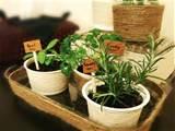 mini indoor herb garden recuperando contenitori di plastica