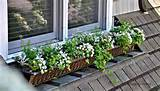 Summer window box and container garden ideas and tips by Serendipity ...