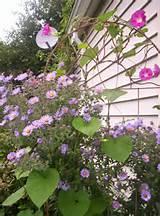 Garden trellis | Garden Ideas | Pinterest