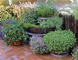 herb container garden outdoor ideas pinterest
