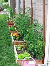 ... cool plants behind us | gardening | Pinterest | Container Garden, G