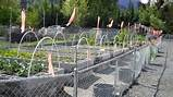 vegetable garden fence ideas deer
