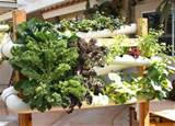 Hydroponic Vegetable Garden Design | Native Garden Design
