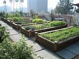 rooftop gardens jpg