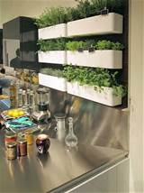 Herb garden in kitchen in Ideas for the home